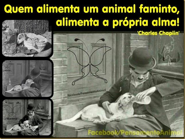 chaplin-animais