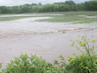 Flooded field near Fir Avenue southwest of Wellman