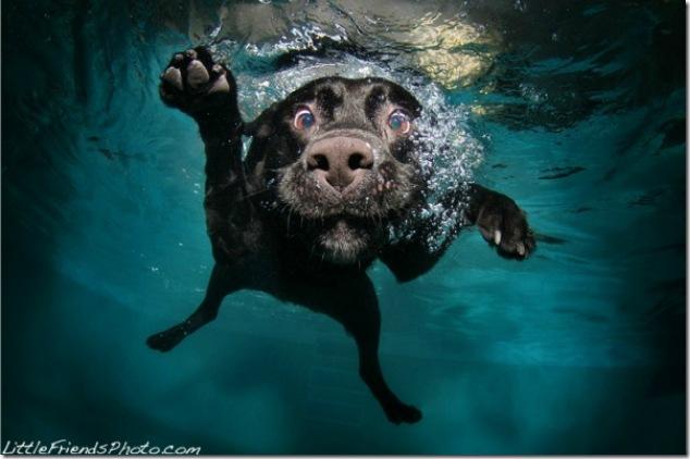 Underwater-Dogs-5