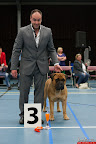 20130510-Bullmastiff-Worldcup-0919.jpg