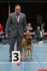 20130510-Bullmastiff-Worldcup-0919.jpg