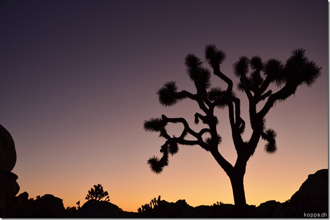 110928 Joshua Tree NP (16)