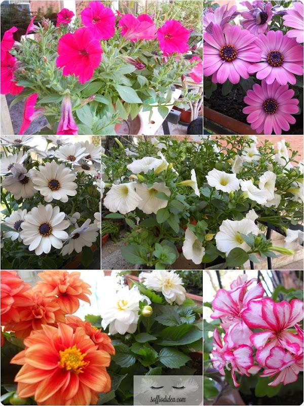 soffiodidea-giardinaggio