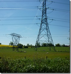 do pylons have babies