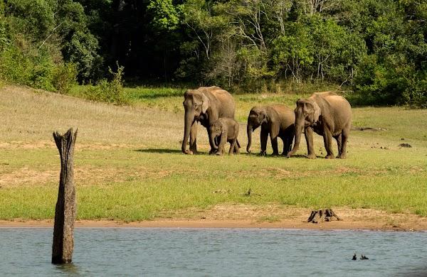 KeralaBlogExpress-Thekkady-3.jpg