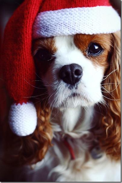 perro gorritos navidad (40)