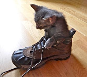 gatto-da-passeggiata_contemplattivit