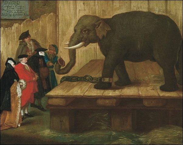 Pietro Longhi, L'éléphant
