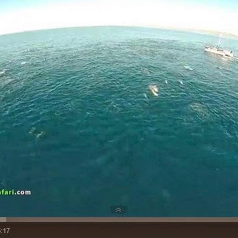Δελφίνια και φάλαινες βγήκαν βόλτα