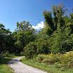 Arnold Arboretum path