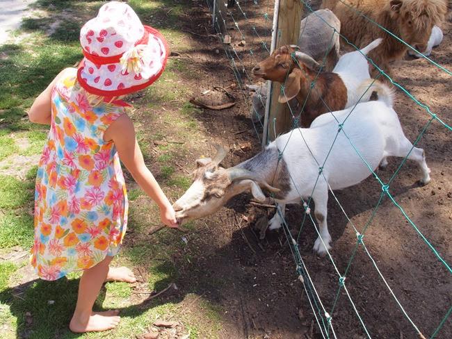 mae - feeding the animals