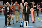 20130510-Bullmastiff-Worldcup-1409.jpg