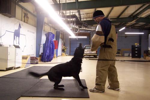 Tarheel Canine Facility Album - facility_training.jpg