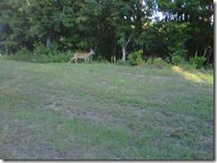 ffb deer