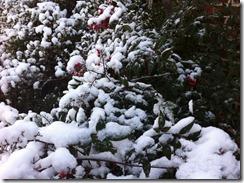 2012-12-26 White Christmas 13