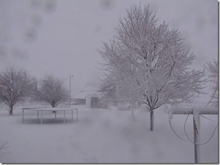 snow 008