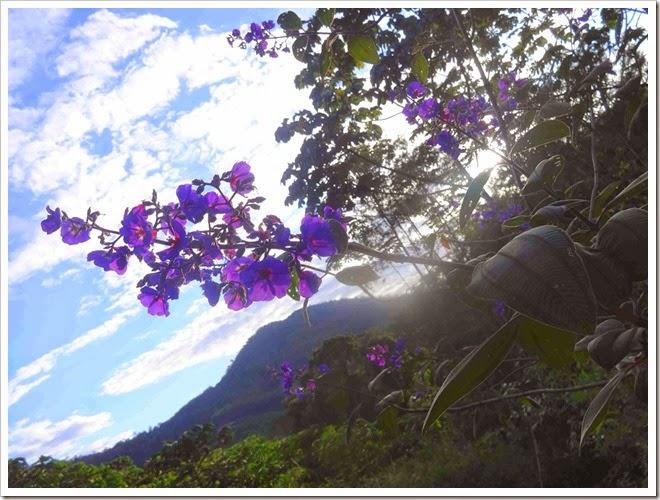 céu e flor lindas
