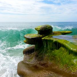 Drenched by Silvan Saria - Nature Up Close Natural Waterdrops ( sealife, green, beautiful, ocean, waterdrops, oceanlife, photography,  )