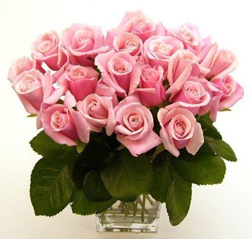 rosas lindas no vaso