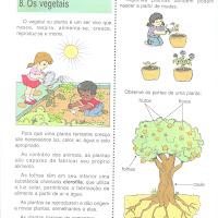 os vegetais 1.jpg