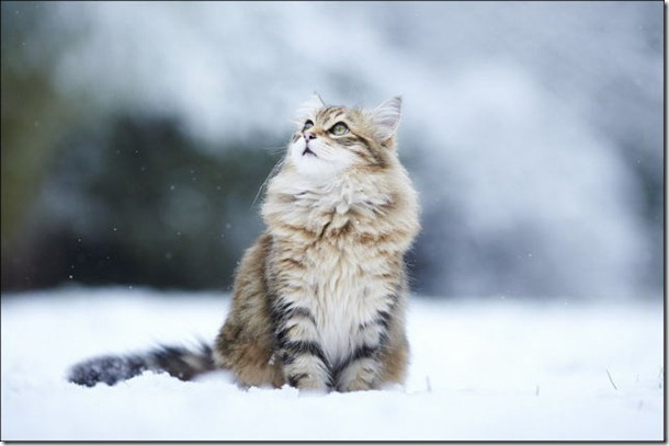 cats-play-snow-9