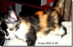 Prissy-chasing-2012-11-251