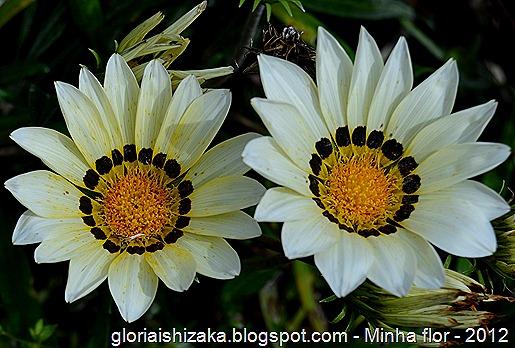 Glória Ishizaka - minhas flores - 2012 - 15