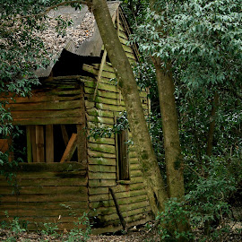 The Old Shed by Cathy Harper - Buildings & Architecture Decaying & Abandoned ( shed, old, building, barn, buildings, sheds, barns, decaying, decay )