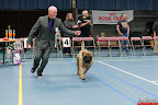 20130510-Bullmastiff-Worldcup-0655.jpg