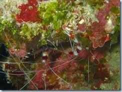 Dive south of Lamen Bay_06 22 14_0040