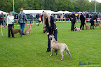20100513-Bullmastiff-Clubmatch_30920.jpg
