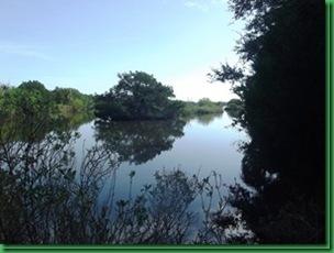 Bulow Creek &  Tamoka SP (46)_thumb[2]