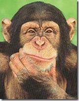 monos piensan blogdeimagenes (7)
