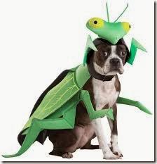 mantis religiosa disfrazcasero (8)