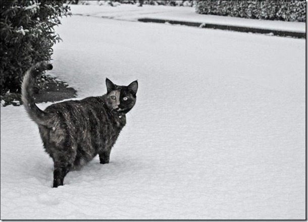 cats-play-snow-2
