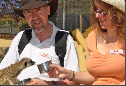 Feeding Meerkats DSC_2342
