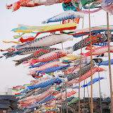 こいのぼり。5月5日の「こどもの日」に、子どもの成長を願って揚げられる。福井県三国町にて。