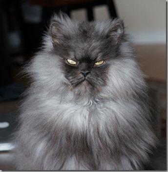 Colonel Meow2