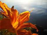 Flower at Jesuit Retreat House in Oshkosh, WI