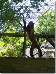 2012.06.02-003 singe
