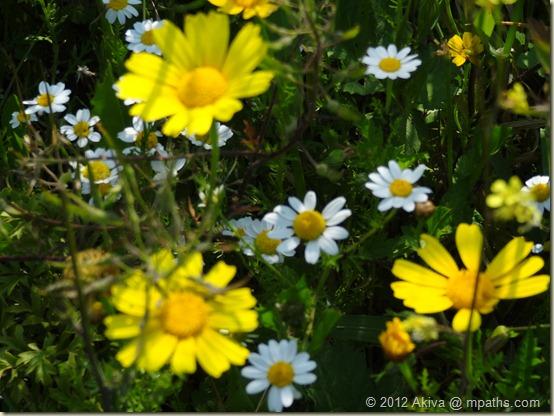 2012-03-23 Socho Flowers 002