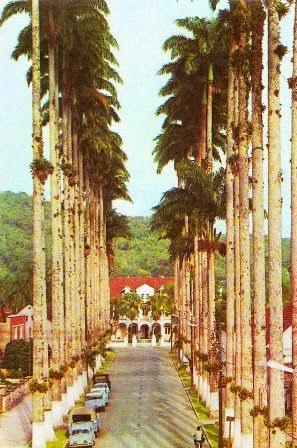 rua das palmeeiras 1960
