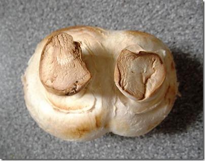 Two legged mushroom2