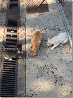 campagne-sostegno-gatti