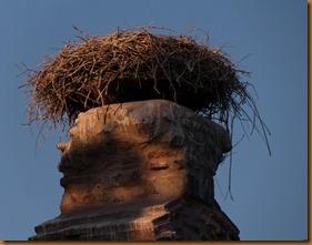 Selcuk, stork nest N