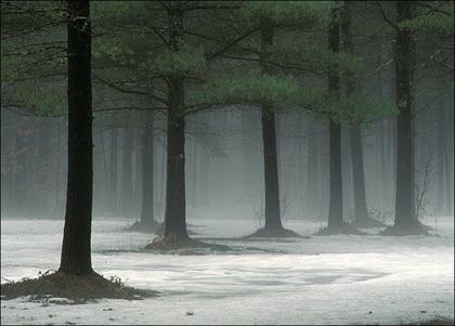 trees65sr