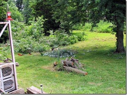 Backyard07-09-13c