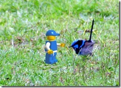 blue wren & blue lego guy in Paint.NET Layers