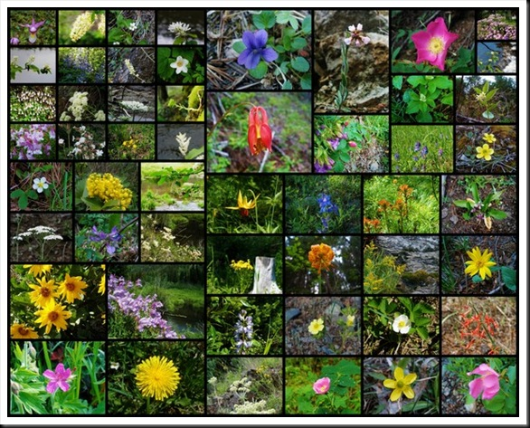 Collage of Wildflowers_tn