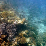 On The Edge of A Coral Wall - Noumea, New Caledonia